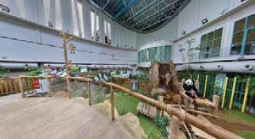 Panda-Zoo-Malaysia